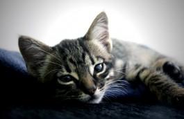 [:gr]Γατάκια και γάτες για υιοθεσία[:en]Cats for Adoption