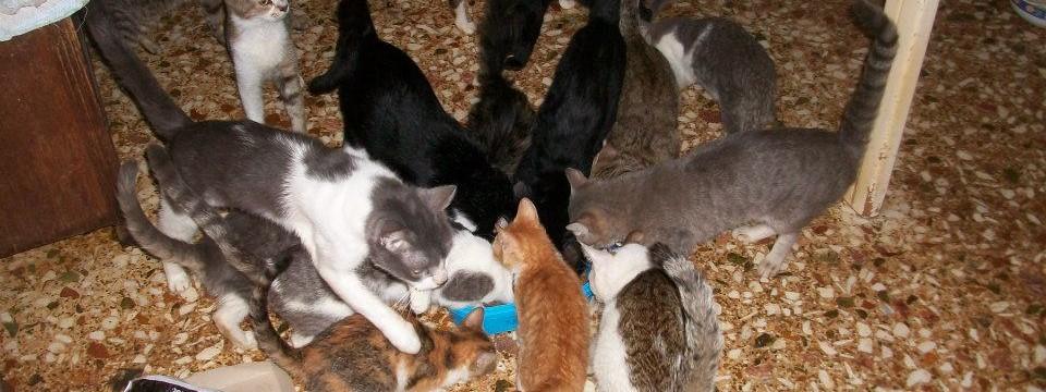 SOS, γάτες συλλέκτριας ζητούν βοήθεια!